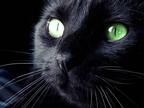 Gatto nero, foto 46