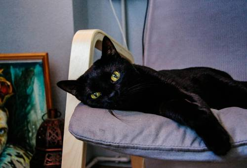 Gatto nero, foto 48