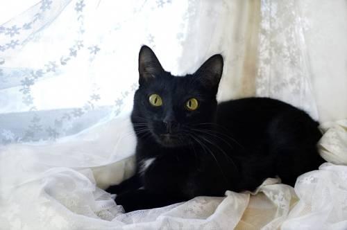 Gatto nero, foto 55