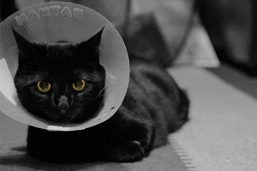 Gatto nero, foto 58