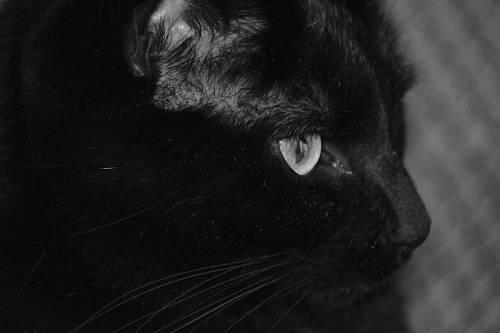 Gatto nero, foto 57