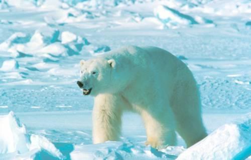 """L'Onu lancia l'allarme: """"Un ottavo delle specie mondiali si estinguerà"""""""