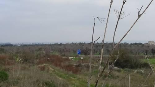 """Gallipoli, l'epicentro del focolaio dove gli ulivi """"sono stati lasciati morire"""" 6"""