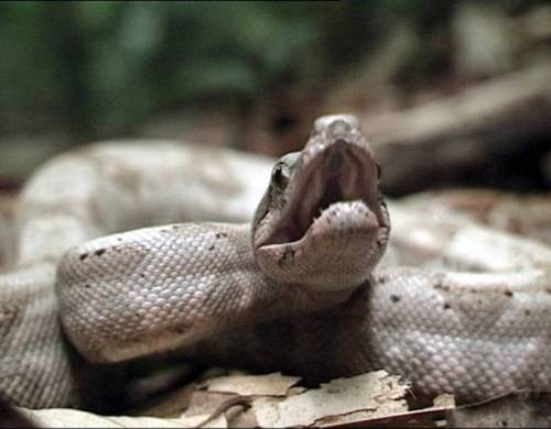 Carmagnola, circensi tengono sinto tra i serpenti per farsi ridare i soldi rubati