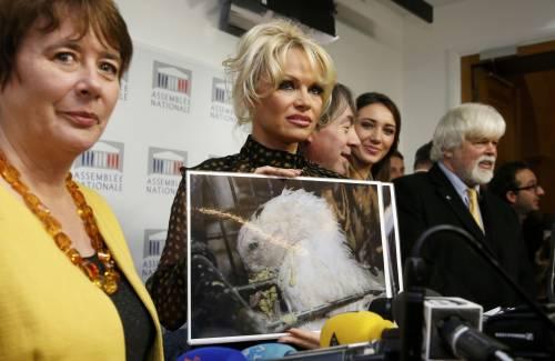 Pamela Anderson contro il foie gras 10
