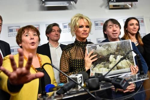 Pamela Anderson contro il foie gras 15