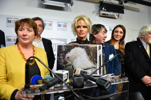 Pamela Anderson contro il foie gras 24