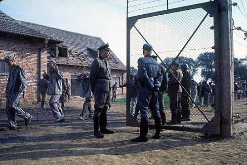 Film sull'Olocausto, foto 43