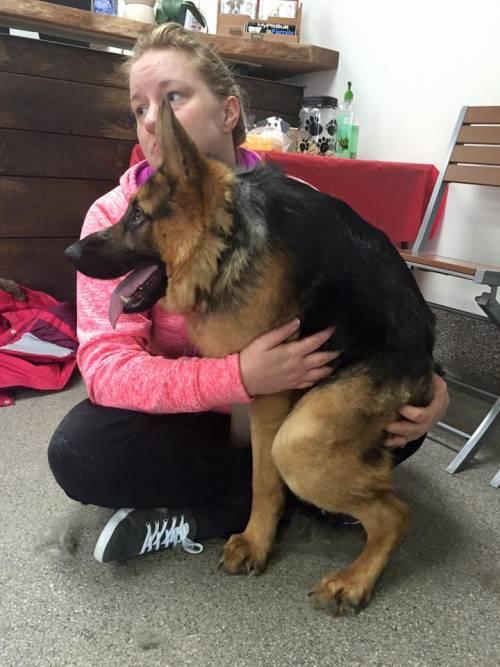 Quasimodo, il cane abbandonato perché malato 3