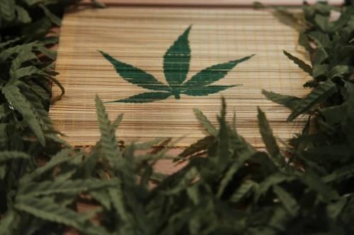 """Consulta: """"Resta reato coltivare cannabis"""""""