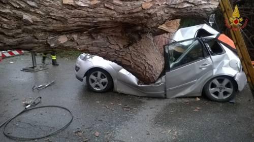 Maltempo a Roma, cade albero su auto 4