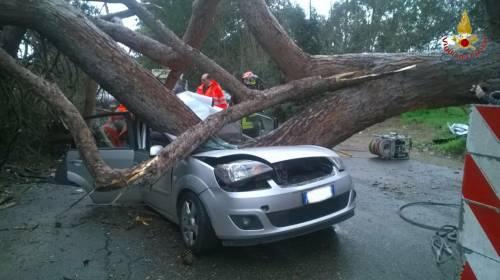 Maltempo a Roma, cade albero su auto 2