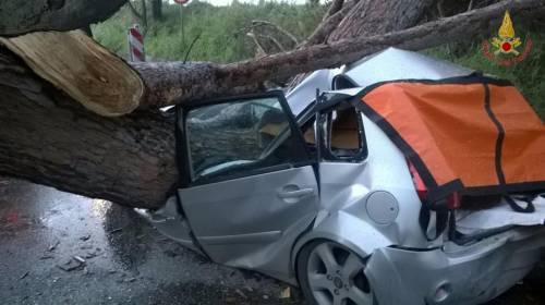Maltempo a Roma, cade albero su auto 3