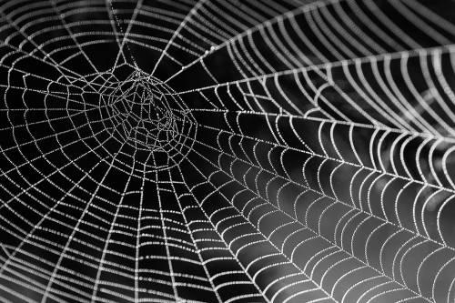 Attenzione al WC: giovane morso ai genitali da ragno velenoso