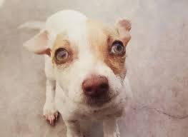 Bubba, il primo cane tossicodipendente