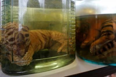 """Il """"Tempio delle Tigri"""" thailandese: morte, contrabbando e maltrattamenti 3"""