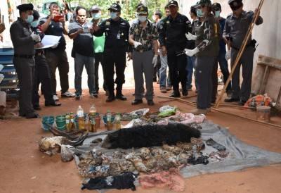 """Il """"Tempio delle Tigri"""" thailandese: morte, contrabbando e maltrattamenti 2"""