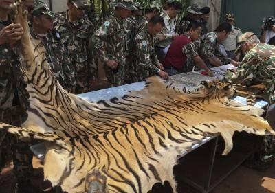 """Il """"Tempio delle Tigri"""" thailandese: morte, contrabbando e maltrattamenti 4"""