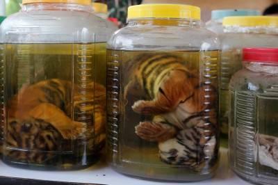 """Il """"Tempio delle Tigri"""" thailandese: morte, contrabbando e maltrattamenti 5"""