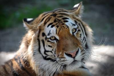 """Il """"Tempio delle Tigri"""" thailandese: morte, contrabbando e maltrattamenti 7"""
