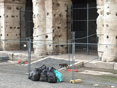 Il Colosseo della vergogna: turisti tra rifiuti ed escrementi 6