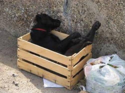 Cane morto abbandonato tra i rifiuti: il gesto crudele indigna il web