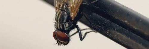 Troppe mosche, rimandate le udienze dei giudici di pace
