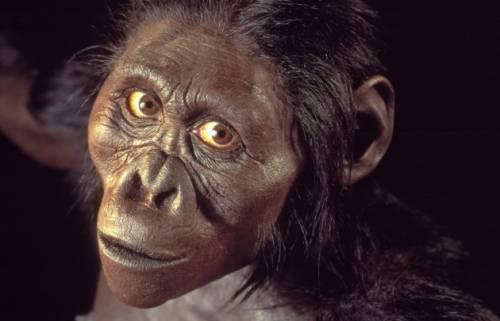 """Gli antropologi: """"L'australopiteco Lucy morì cadendo da un albero"""""""