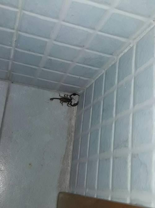 Brindisi, l'ufficio anagrafe invaso dagli scorpioni