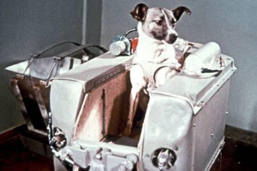 Auguri Laika, 60 anni fa la cagnetta stellare conquistava lo spazio