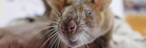 Degrado nel leccese: dalla mensa i topi invadono la scuola