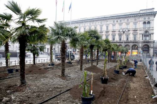 I banani arrivano in piazza Duomo 16