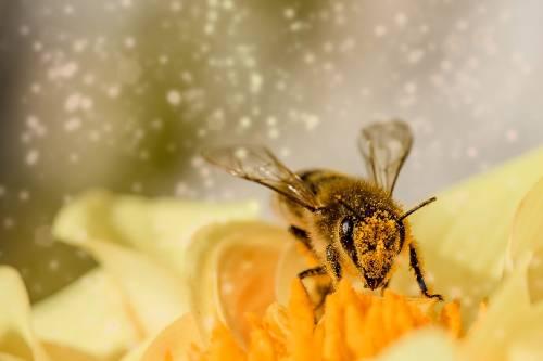 Veleno d'api: ecco come agisce sulla pelle