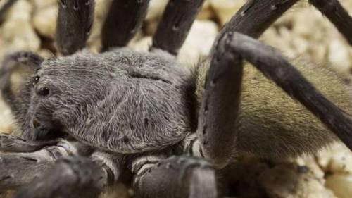 Ha paura del ragno e si butta dalla finestra. Bimbo cade da 7 metri