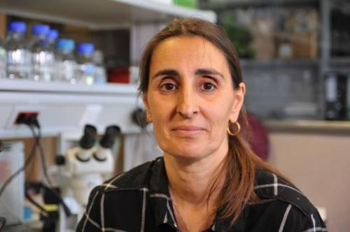Scopre bruco mangia-plastica: ora la biologa italiana è disoccupata