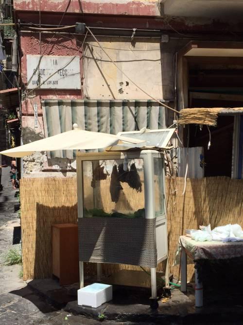 Napoli, il quartiere della Forcella 10