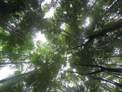 Arashiyama, il fascino invincibile della foresta di bambù 2