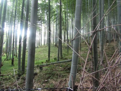 Arashiyama, il fascino invincibile della foresta di bambù 3