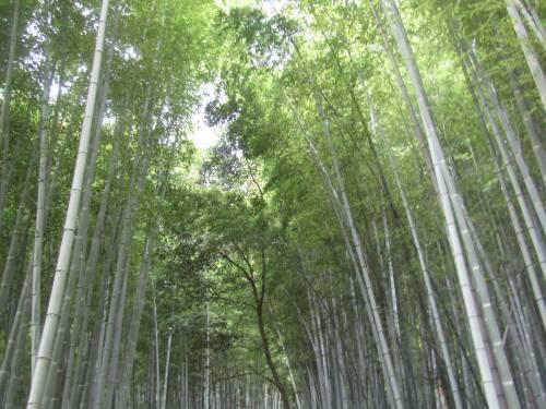 Arashiyama, il fascino invincibile della foresta di bambù 4