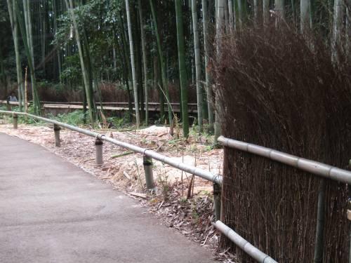 Arashiyama, il fascino invincibile della foresta di bambù 5