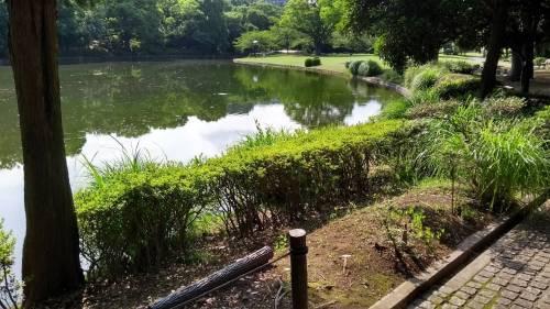 Torri, fossati e giardini eccezionali: nel Palazzo Imperiale a Tokyo 7