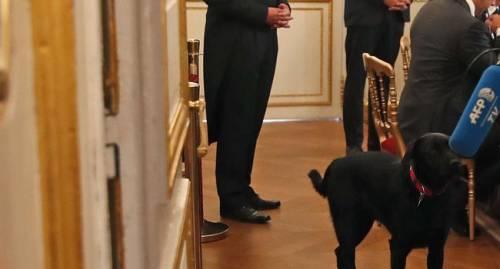 Il cane di Macron fa pipì durante un meeting all'Eliseo