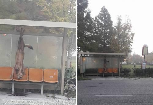 Lupo ucciso e appeso per le zampe alla fermata dell'autobus