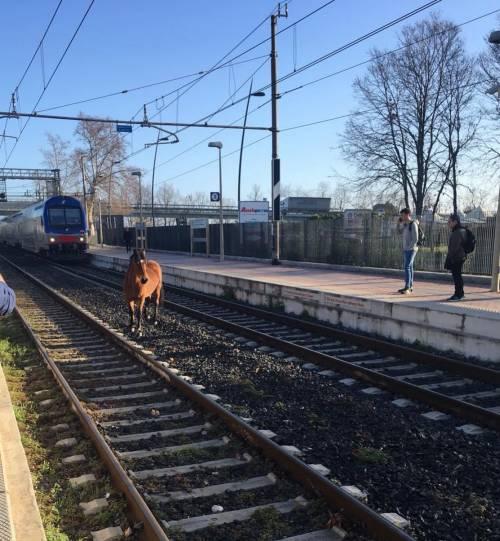 Un cavallo sui binari blocca la tratta Roma-Nettuno