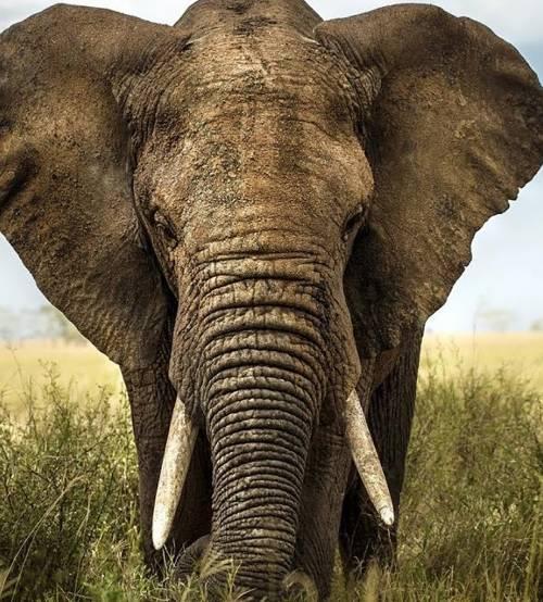 L'umanità degli animali Elefanti crocerossini lupi social, orche giocose