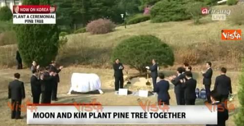 Kim e Moon piantano un albero in segno di pace
