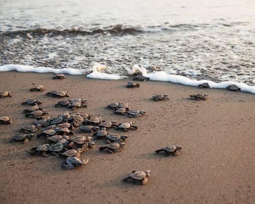 Salvate, curate e spiate. Da Favignana arriva il gps per le tartarughe