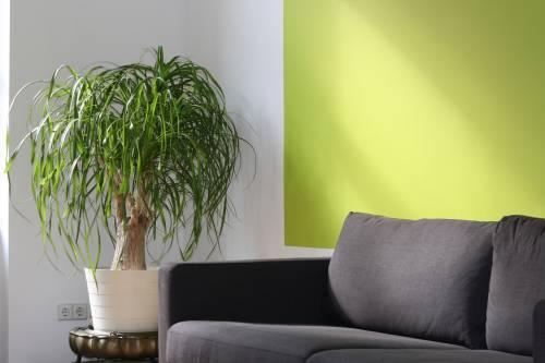 Casa, le piante da interni che arredano e purificano l'aria