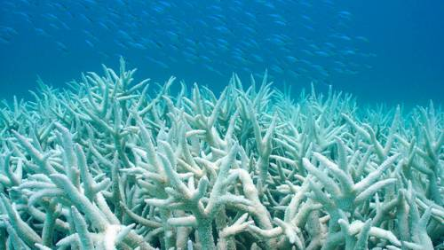 Tutelare i coralli bianchi di Santa Maria di Leuca
