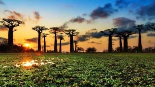 Giallo in Africa, morti i baobab millenari
